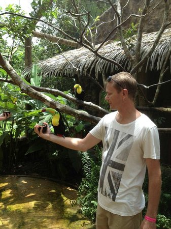 The Springs Resort and Spa: Feeding the Toucans