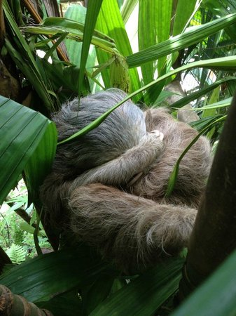 The Springs Resort and Spa : The sleeping Sloth