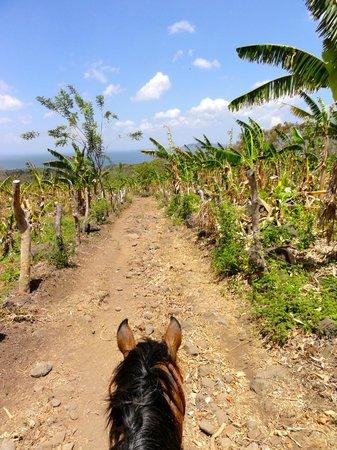 Haris'horses : Our ride