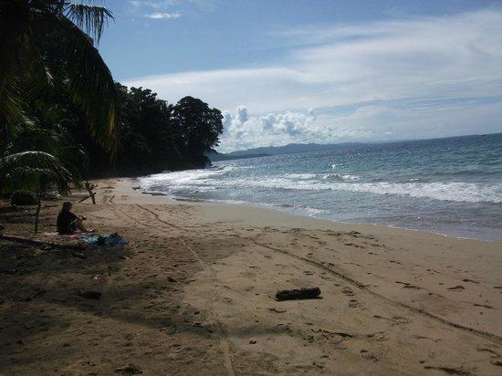 Hotel Pura Vida: playa Manzanillo