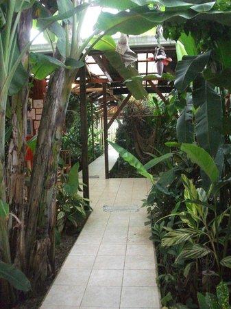 Hotel Pura Vida: pura vida
