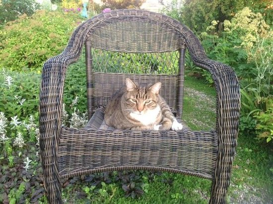 One of a Kind Bed and Breakfast: Visiting neighborhood cat