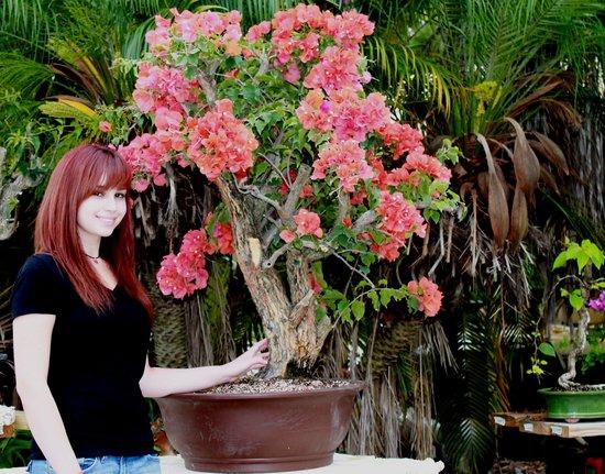 Miami Tropical Bonsai