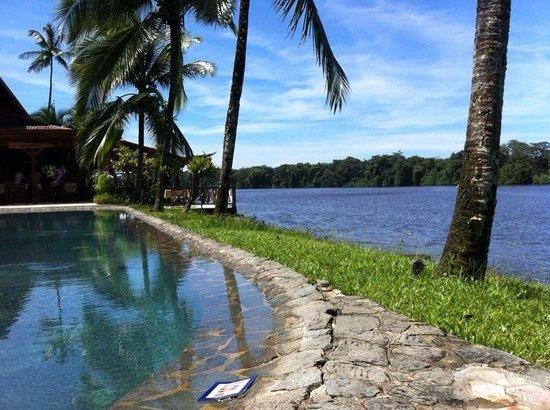 Tortuga Lodge & Gardens: La piscina