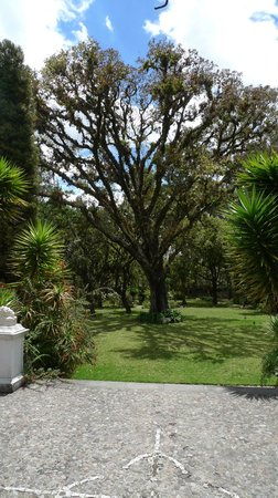 Hacienda Cusin: Beautiful tree in garden