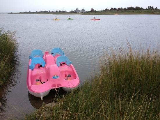 Sea Shell Motel: paddleboat