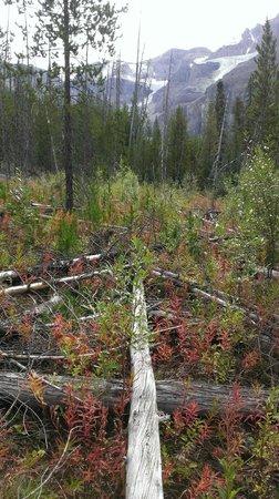 Stanley Glacier Hike : New growth