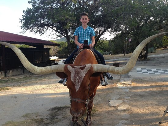 Mayan Dude Ranch: Longhorn photos