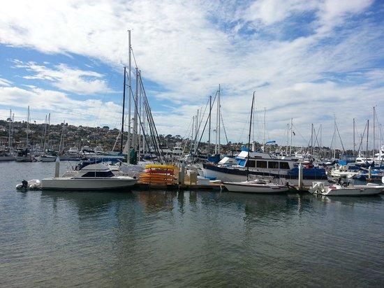 BEST WESTERN PLUS Island Palms Hotel & Marina: marina