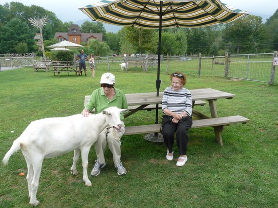 Woodstock Farm Sanctuary : Petting Emet, the goat.