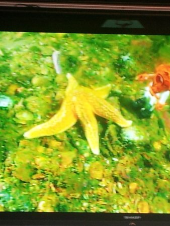 Diver Ed's Dive-In Theater: Starfish on Screen