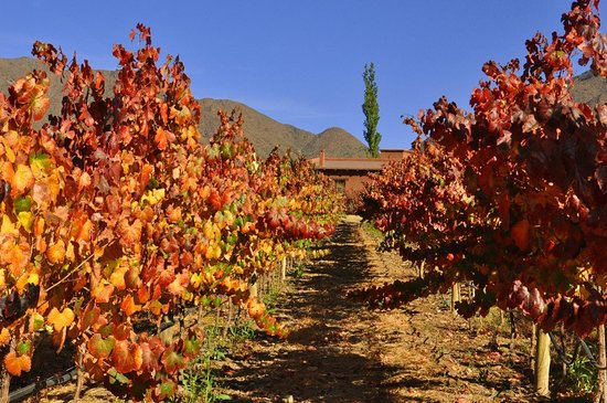 Miraluna Cabañas: Viñas en otoño