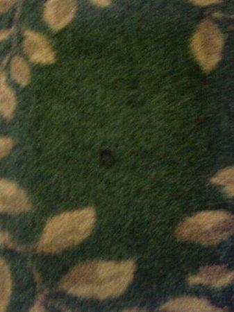 Days Inn Colorado : cigarette burned carpet in non smoking room