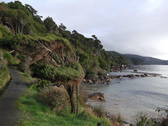 Ruggedy Range Wilderness Experience: The Rakiura Track going to Port William Hut.
