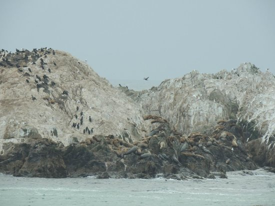 Scenic Road Walkway: focas e leões marinhos