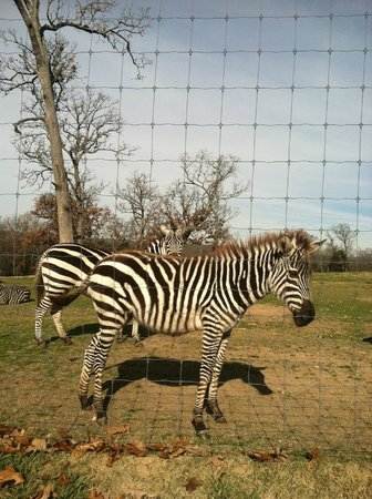 Promised Land ZOO: The Zebras are my favorite
