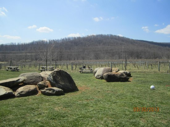 Rappahannock Cellars : Vineyard