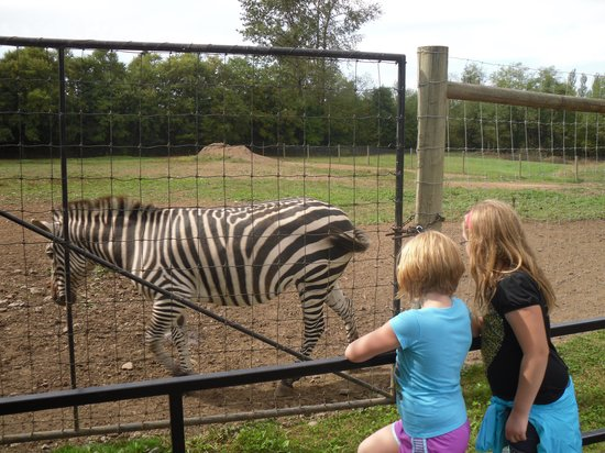 Greater Vancouver Zoo: Zebras