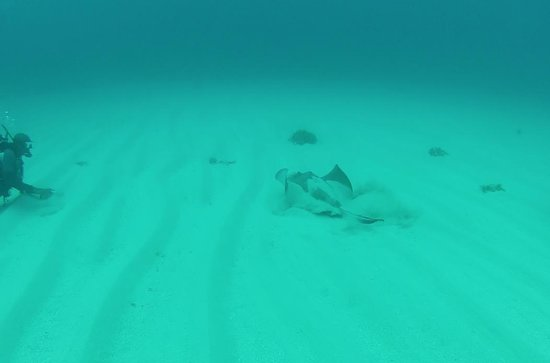 Dolphin Dive: Small Sting Ray