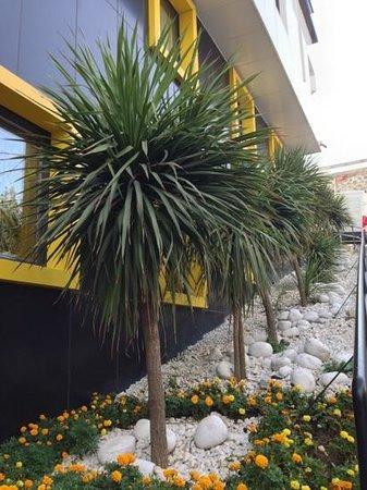 Tempo Hotel Caglayan: Plants at the entrance.