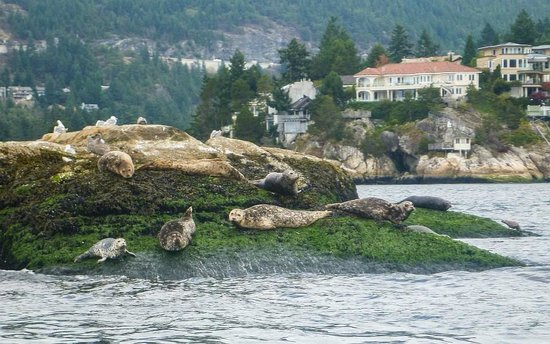 Vancouver Water Adventures: Seal Island