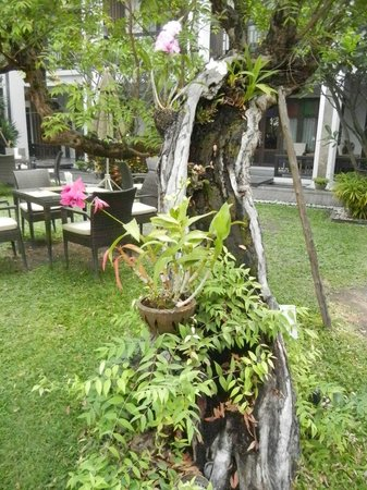 De Lanna Hotel, Chiang Mai: Breakfast among the orchids