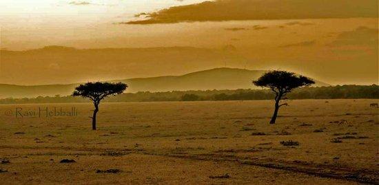 Kenya Incentive Tours & Safaris - Day Tours : Masai Mara beauty!