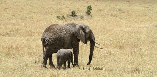 Kenya Incentive Tours & Safaris - Day Tours : Elephant with a calf...