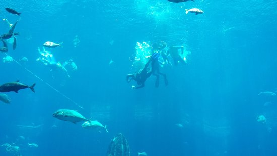 Atlantis, The Palm: Aquarium Snorkeling