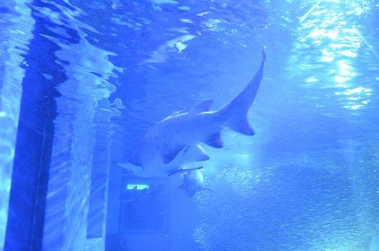 Aqua Museum, Yokohama Hakkeijima Sea Paradise - Picture of Yokohama Hakkeijim...