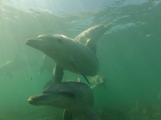 Bairds Bay, Australia: Lightning, Mariah, Sunny.