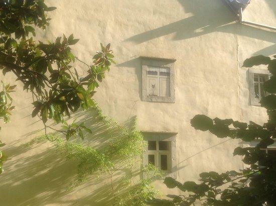 Maison Lespoune : Cat in the window