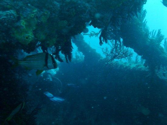 South Florida Diving Headquarters: Jim Atria wreck
