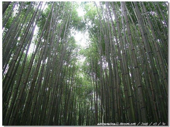 Hsinchu County, Taïwan : 蔥鬱竹林