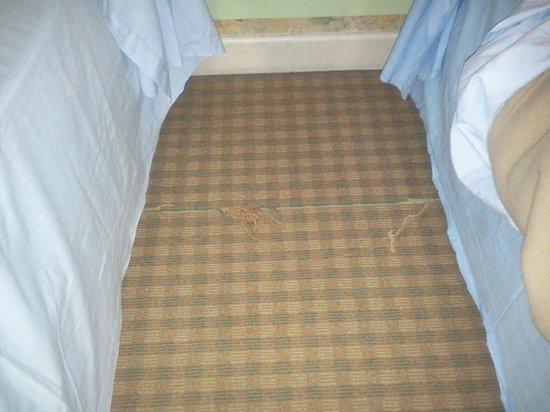Hotel Saint Jean: la moquette effilochée, un exemple