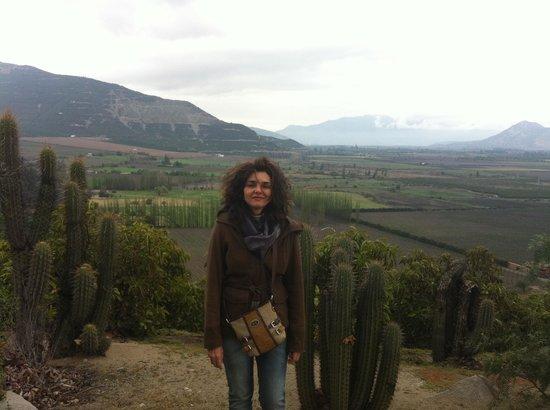 Vina Errazuriz : Eu em Errarzuriz