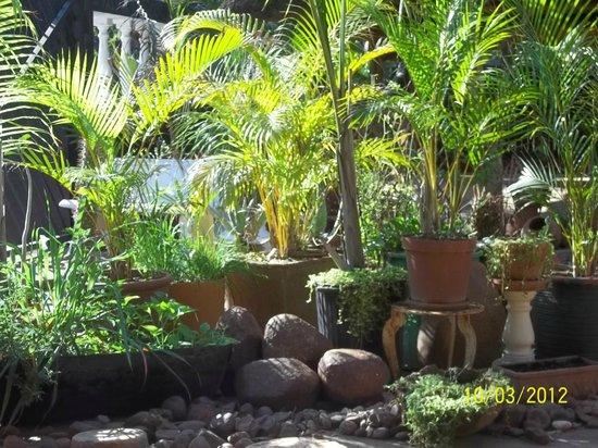 Carpe Diem Restaurant: Restaurant garden at outdoor dining area