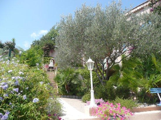 La Mimosane : le jardin