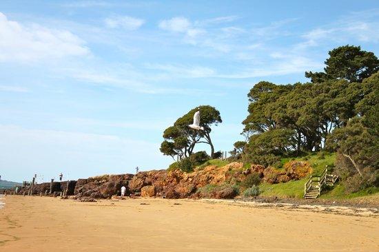 Tropicana Motor Inn: beach near hotel