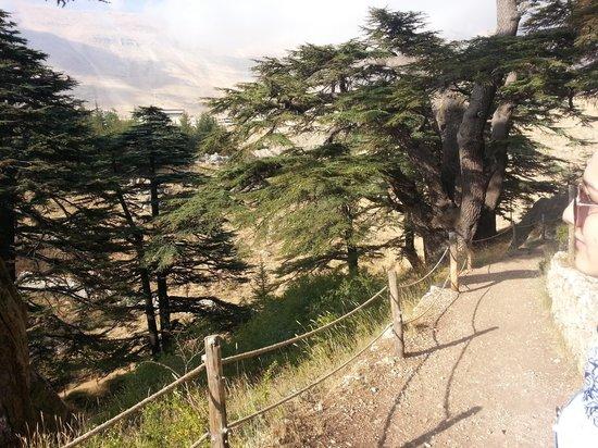 Ehden Country Club : Cedars of Lebanon
