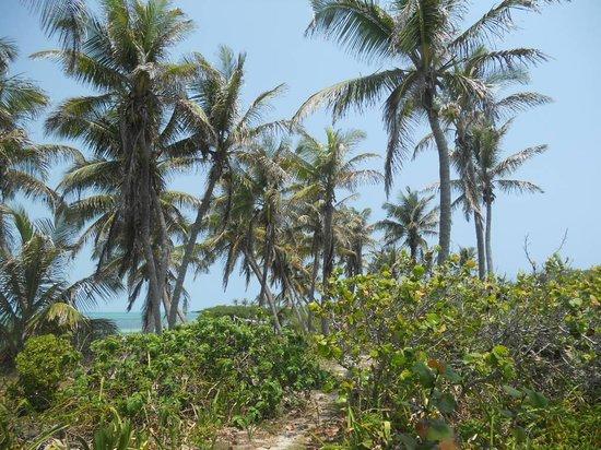 Sian Ka An Hotel And Beach Club: Auf der Insel Paradiso, Tolle Natur