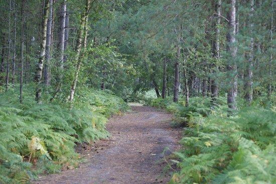 Oakdene Forest Park: forest