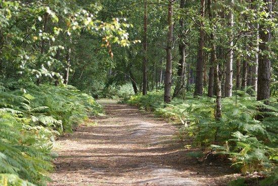 Oakdene Forest Park: Forest walk