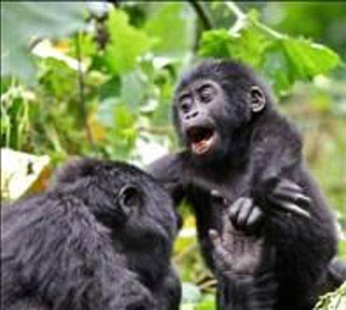 Bwindi Impenetrable National Park : tracking experience