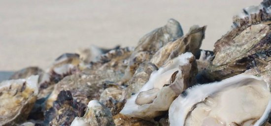 Matthew Flinders Terraces: Oysters bought from the American River jetty