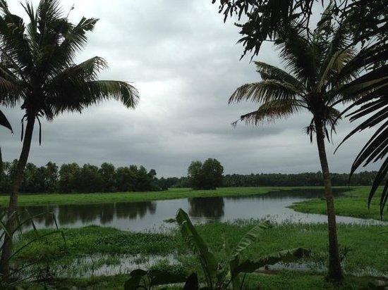Pattarumadom Ayurveda: view from room