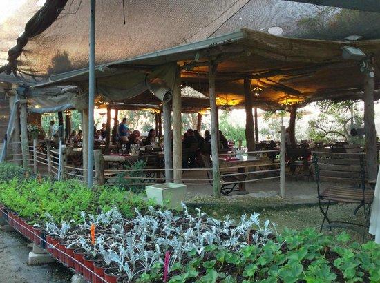 Exceptional Ramau0027s Kitchen: View Of Restaurant Through Plant Nursery