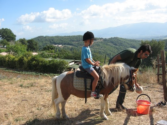 Agriturismo Santa Caterina: Pony