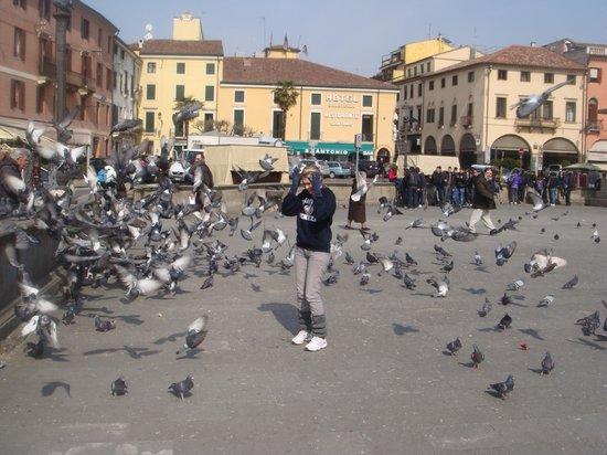 Sheraton Padova Hotel: Atacada pelos pombos