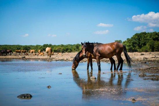 Giara di Gesturi - Escursioni a Cavallo: I Cavallini della Giara